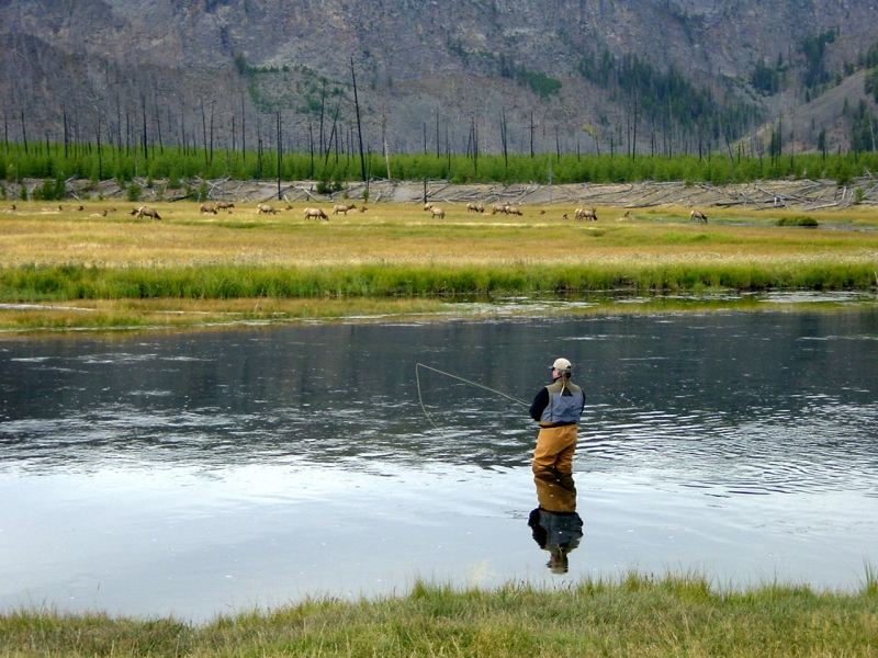 Fishing report henry 39 s fork anglers for Yellowstone park fishing report