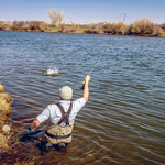 ​Devan Ence hooked up while fishing the Baetis hatch on the Lower Henry's Fork.