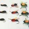 Beetle Selection