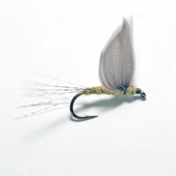 Lawson's Nohackle Dun